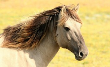 Loomad muudavad elu rõõmsamaks ja värvikirevamaks