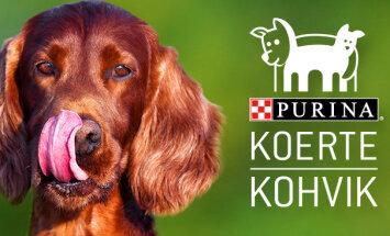 ÜRITUS: Juba homme on võimalus külastada esimest koerte kohvikut!