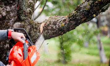 Kuldreeglid, millega tuleb arvestada puu lõikamisel