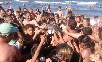 Ради селфи туристы до смерти замучили дельфина