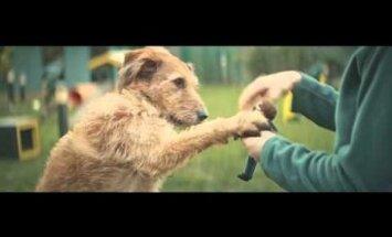 Südamlik VIDEO: iga hüljatud koera jaoks on kusagil hea peremees