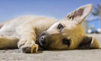 ÜRITUS: Laupäeval korraldab ELS aianduskeskuses Hortes loomade päeva tähistamiseks meeleoluka perepäeva!