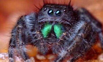 Ämblikud kuulevad meid oma karvaste jalgadega