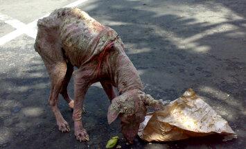 Karvutuks jäänud koer Kiviõlis saab ravi
