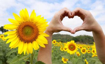 Kas teie vihkate või armastate kollaseid lilli?