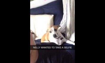 Humoorikas VIDEO: Vaata, kuidas see koer poseerida oskab