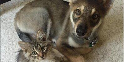 FOTOD: Parimad sõbrad igavesti: koer valis varjupaigast välja kassipoja ja sai tema kasuvanemaks