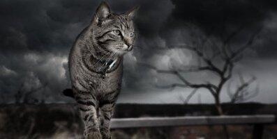 7 kõhedusttekitavat lugu: kummitusloomad, kes tulid tagasi oma omanikke vaatama