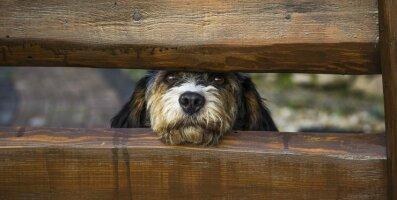Need sammud aitavad võõra koeraga esimest korda kohtudes tema usaldust võita