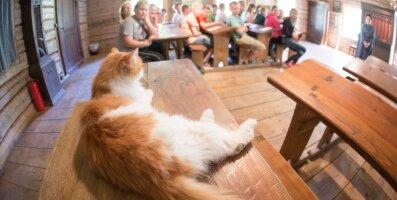 Kass Hanno läheb koolist kõrtsi ja siis rehetuppa