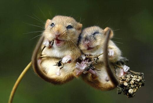 GALERII   Kui armas! Kõige kaunimad loomafotod, mis väljendavad jäägitut sõprust ja armastust