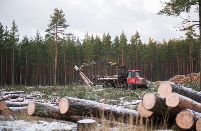 Eesti metsad on valdavalt parimas kasvueas