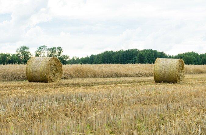 Viljakasvatamise suur risk on ilmastik, mille eest pole põllumees kaitstud.