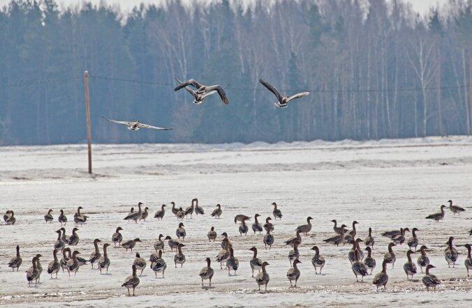 Praegu Euroopas leviv linnugripp inimestele külge ei hakka