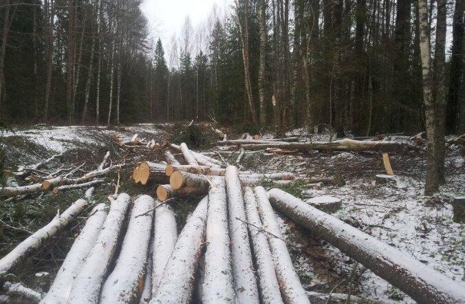 Raie on seotud metsatee rekonstrueerimise ja selle tõttu kaitsevööndi laiendamisega, väidab RMK.