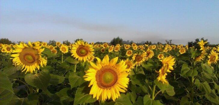 ФОТО: 7 чудесных садов и цветочных полей, которые стоит увидеть весной и летом