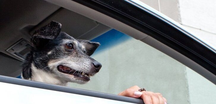 Koos koeraga maailma avastama: kuidas lemmikuga ohutult ja mugavalt ringi rännata?