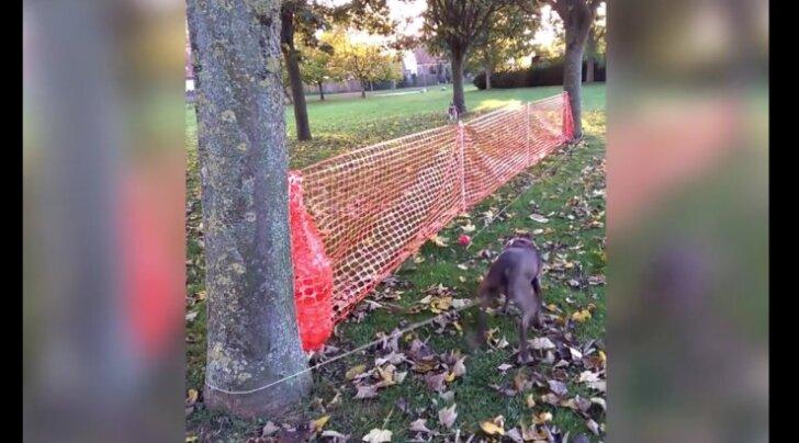 Humoorikas VIDEO: Geniaalne viis koera lõbustamiseks, kui ilm jalutamiseks liiga halb tundub
