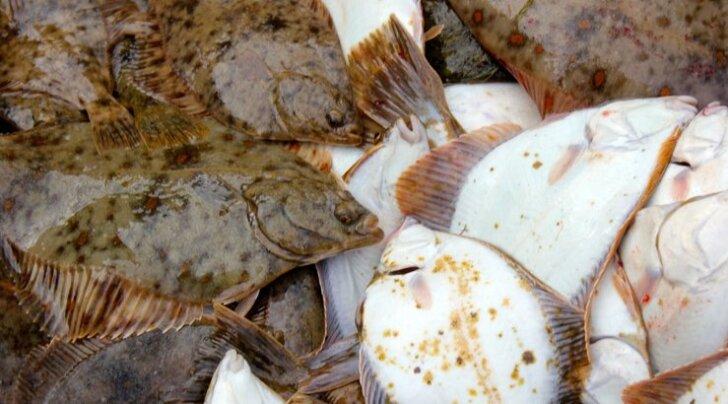 Rannakalurid saavad e-õppe korras kalapüüdmist õppida