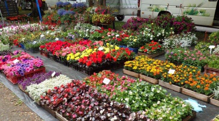 Jäneda aia- ja lillepäevad 2016