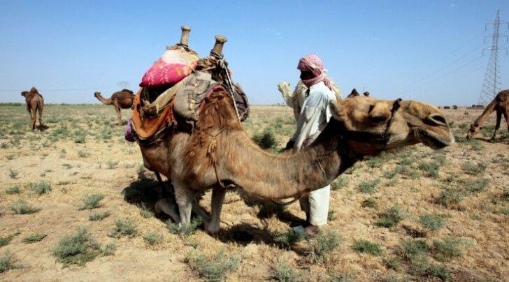 Tapvas kuumalaines läheb raskeks ka beduiinide elu.
