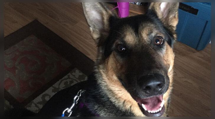 Liigutav lugu: koer tahtis ise oma saatuse üle otsustada ja põgenes varjupaigast