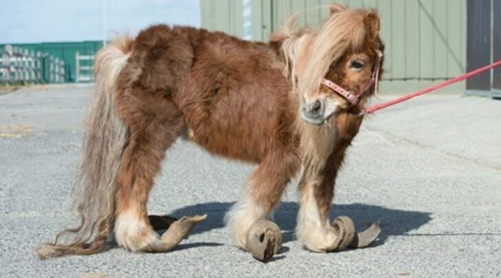 Šokeerivad FOTOD: Surma äärel olnud hüljatud loomad päästeti viimasel hetkel