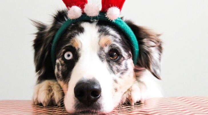 TOP 8: Jõulud tulemas? Vaata parimaid jõulukinke sinu koerale