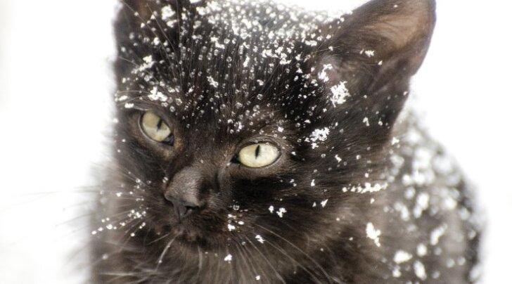 ÜRITUS: MTÜ Kasside Turvakodu korraldab jõulutralli – kingi loomadele üks ilus päev!