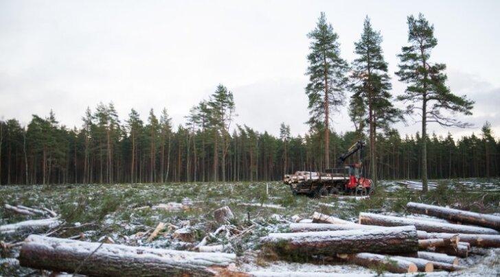 Järsult suurendatav hakkpuidu põletamine on keskkonnale ohtlik