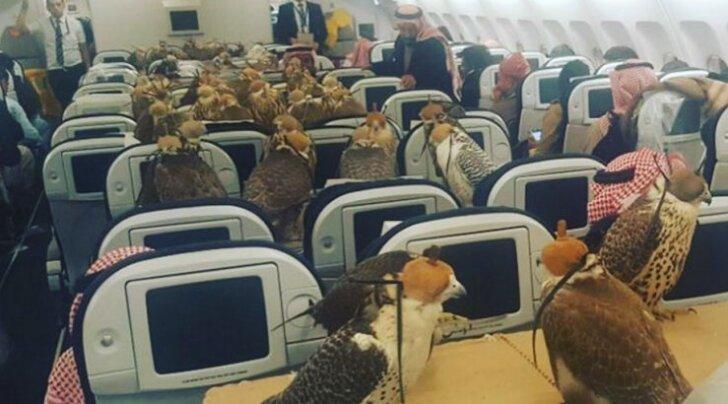 Internet kihab: reisija ostis äsja 80 lennukipiletit oma 80 linnule