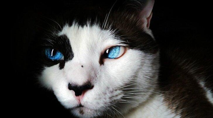 TEST: Pane end proovile! Kui osav oled sa kassitõugude vallas?