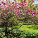 Magnooliad – eksootilised iludused