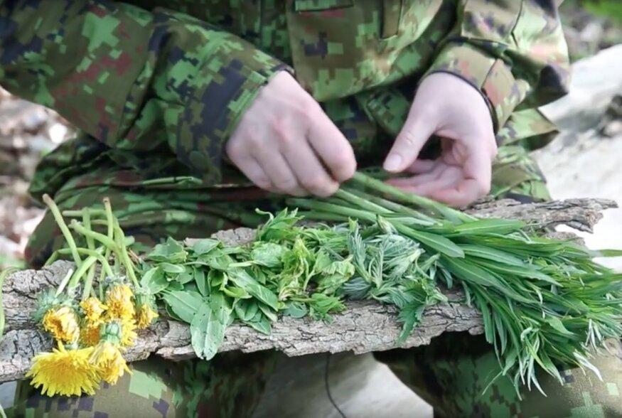 VIDEO: Kevadises metsas nälga ei jää: Vaata, kuidas valmistada naadi-põdrakanepi-nõgese hautist