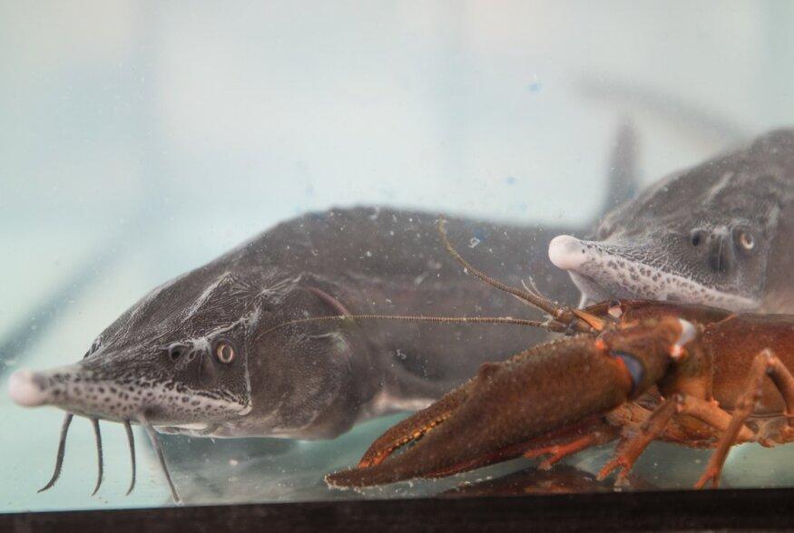 Eesti kala nädala avamine Telliskivis