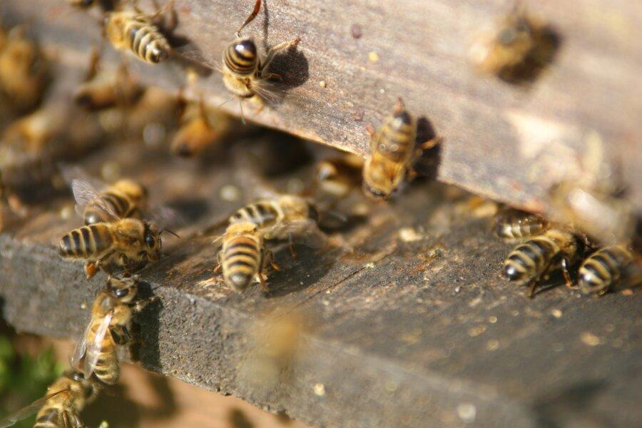 Enne kui ostad mett, loe neid mesiniku nõuandeid