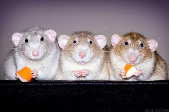 Vennad Izumi, Lysander ja Kaelan naudivad maiuspala.