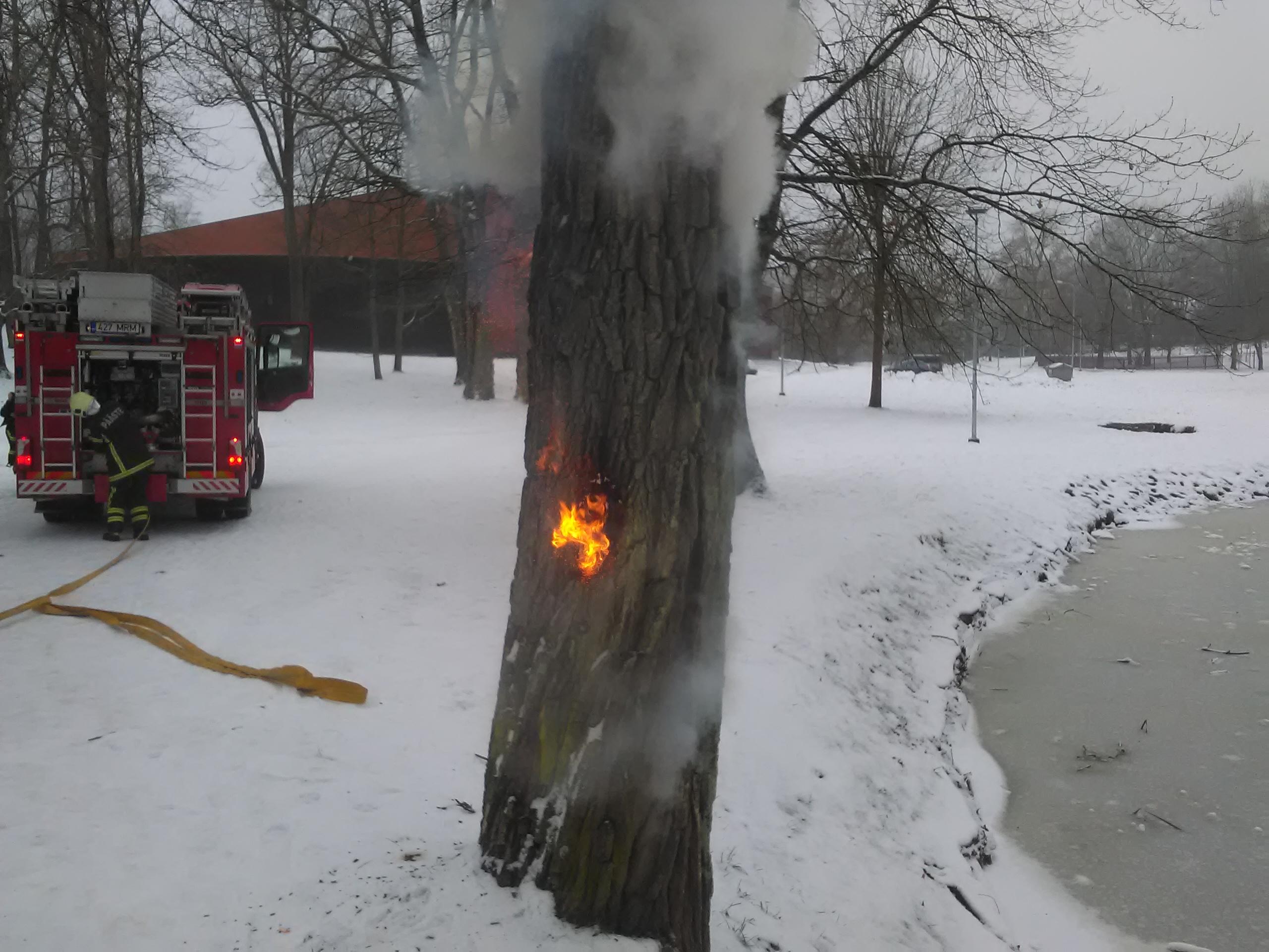 Paugutist süttinud puu Valgas