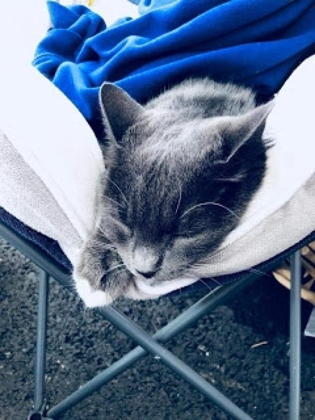 Kass Dmanisi